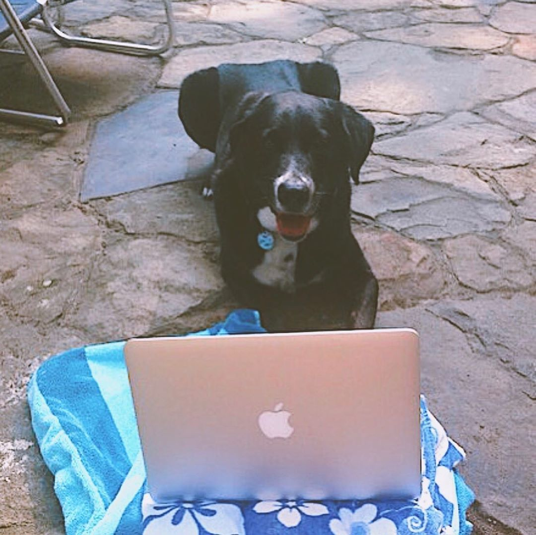 Dog in front of a laptop